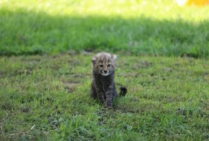 PALFINGER and the cheetah baby Niara